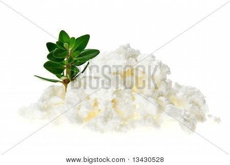 Cottage Cheese (curd) Heap With Thyme Twig