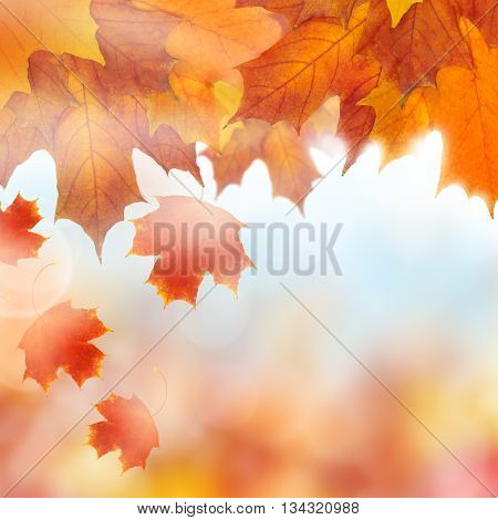Autumn orange and yellow leaves on blue background