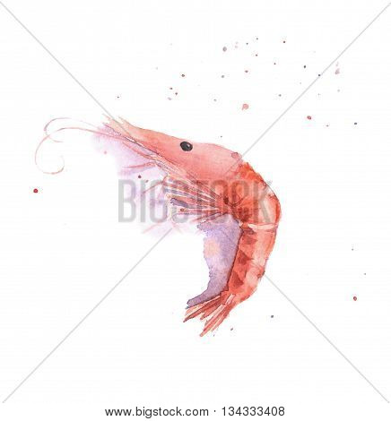 Watercolor hand drawn shrimp on a white background