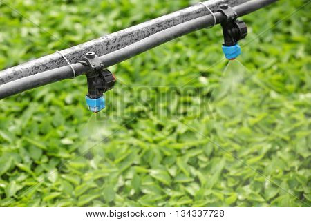 Greenhouse watering system in action