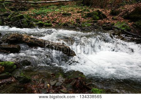 Small river in forest