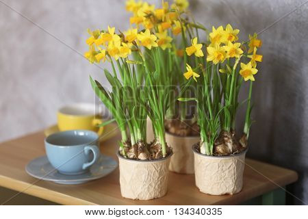Beautiful narcissus and cups on wall background