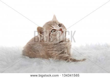 Small cute kitten on carpet