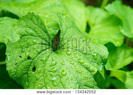 Vibrant Green Leaves of Plants with Rain Drops