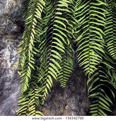 Fern Atmosphere Greenery Plants Tourism Natural Concept
