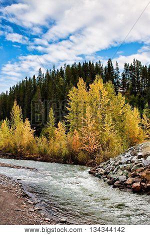 Scenic vista of yellow aspens lining a stream in autumn