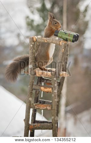 close up of red squirrel in a watch tower
