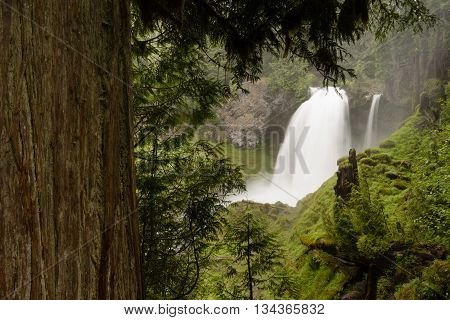 Sahalie Falls McKenzie River National Recreation Trail Nature Landscape