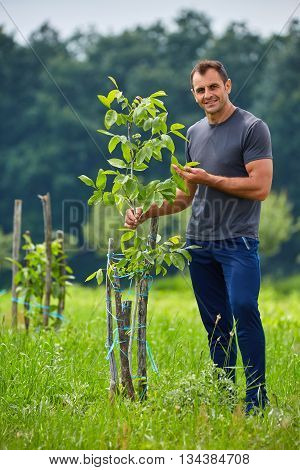 Farmer Checking His Walnut Trees