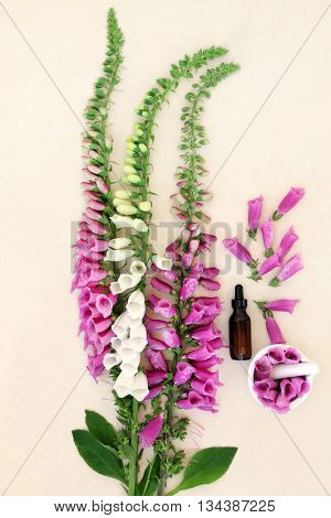 Foxglove flower arrangement with dropper bottle and mortar with pestle over handmade paper background.  Digitalis purpurea.
