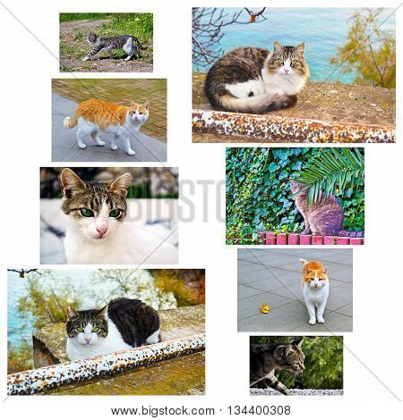 photo collage with cats - animal cat collection