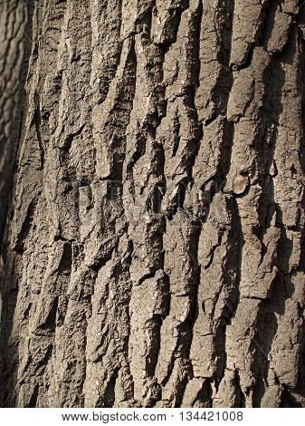 The beautiful wooden bark with deep crancles sunlit background