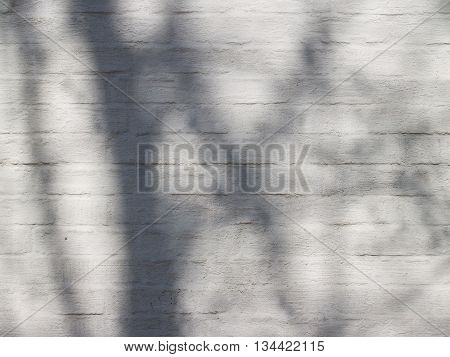 Beautiful textured plastered surface of a brick facade with spring branches shadow