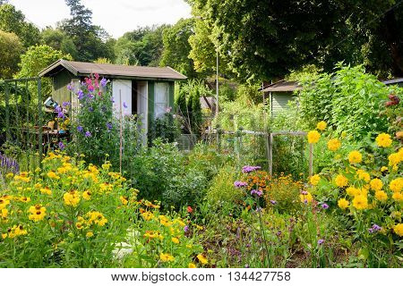An allotment garden filled with flowers. A green wooden shed with white door and window in the background.
