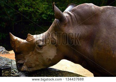 rhinoceros standing inside the safari zoo daytime