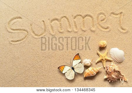 A lot of seashells starfish and butterfly on sand. Exotic concept. Summer beach.