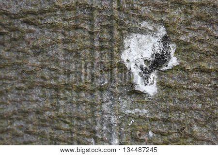 Macro Of Bird Poo On The Bark Of A Tree