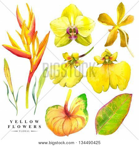 Watercolor collection of orchid flowers, anthurium and strelitzia. Handmade painting on a white background. Yellow set.