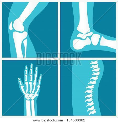 Set of human joints knee joint elbow joint ankle joint wrist skeletal spinal bone structure of Human Spine emblem or sign of medical diagnostic center or clinic flat vector illustration.