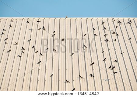 Group of Bird perching like a heartshape on the roof.