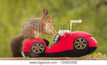 red squirrel with closed eyes on a car