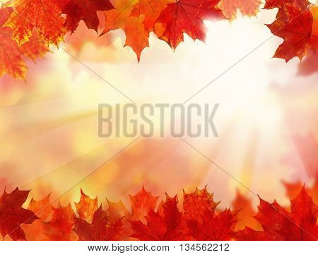 Fall Background with Autumn Maple Leaves and sunlight