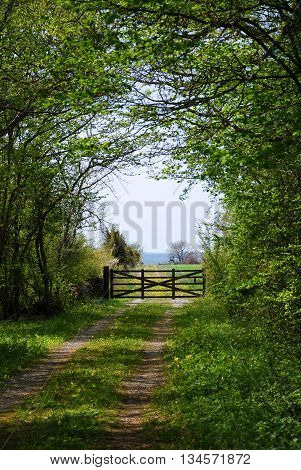 Old wooden gate at a farmers road in a green spring colored landscape