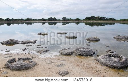 Rare phenomena and oldest living marine fossils, stromatolites, in the Lake Thetis landscape with sand under an overcast sky in Western Australia.