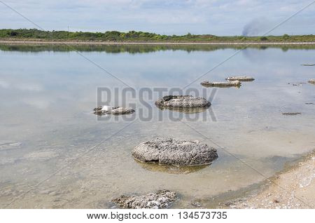 Rare living marine fossils, stromatolites, in the saline Lake Thetis landscape bordered by green flora under an overcast sky in Western Australia.
