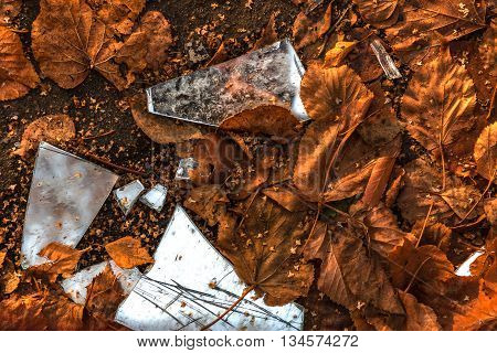 splinters of the broken mirror against the fallen-down autumn leaves
