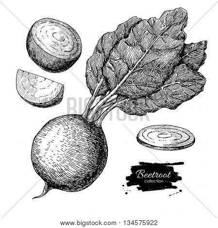 Beetroot hand drawn vector set. Vegetable engraved style illustration. Isolated Beetroot and sliced pieces. Detailed vegetarian food drawing. Farm market product.