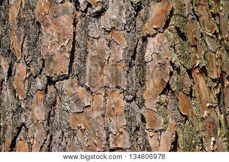 Tree bark background at forest area Georgia, USA.