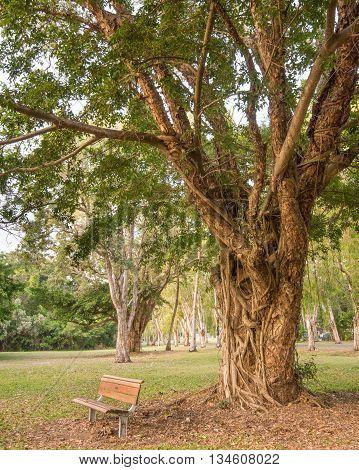 Bench underneath paperbark (a.k.a. honey-myrtle) tree at Jalunbu Park, Port Douglas, Queensland, Australia.