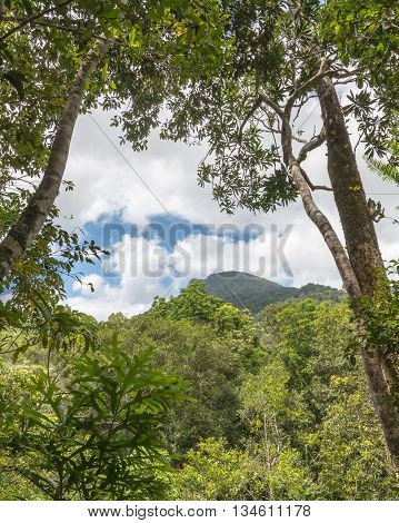 Manjal Dimbi (a.k.a. Mount Demi) Lookout in Mossman Gorge, Daintree National Park, Queensland, Australia.