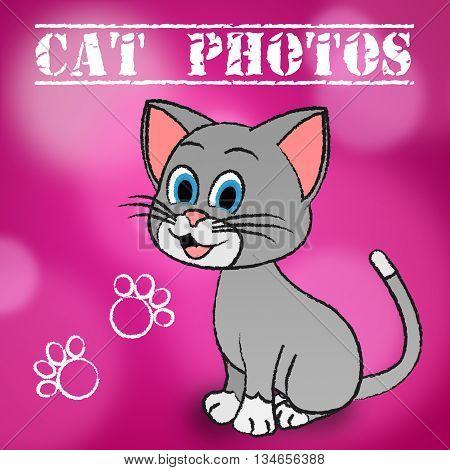 Cat Photos Indicates Snapshot Photography And Camera