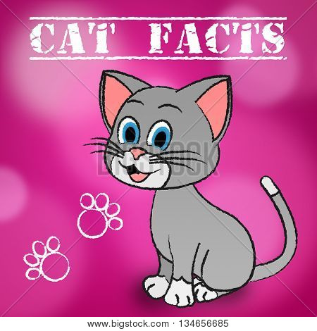 Cat Facts Indicates Details Kitty And Pets