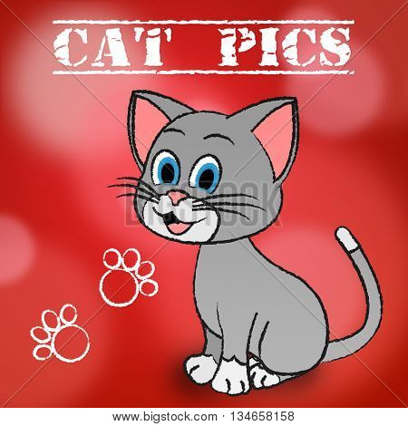 Cat Pics Meaning Photos Puss And Pictures poster
