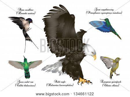 It is illustration of amazing birds set - birds in flight