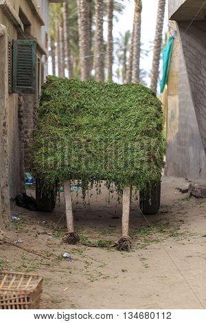 Alfalfa over Cart in Damietta, Egypt .