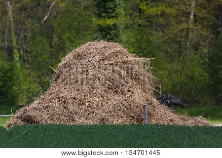 look for a needle in a haystack