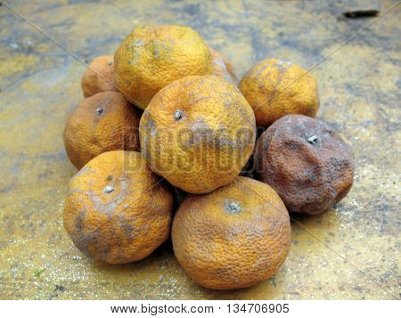 rotten oranges on old cement  background ,
