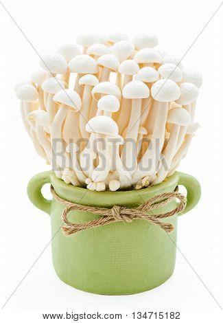 White beech mushrooms Shimeji mushroom Edible mushroom in green pot isolated on white background