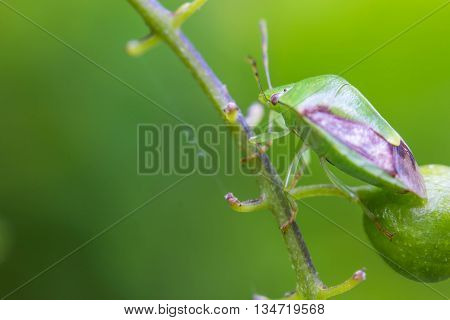 a small cute insect on green branch