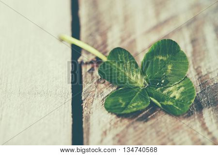 Green clover leaf on wooden background, close up