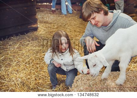 Child and father feeding and taming a goat kid at the farm
