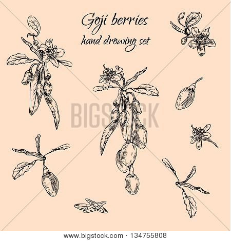 Hand drawn goji berries monochrome set. Engraving illustration. Nature organic superfoods design elements. Vector illustration