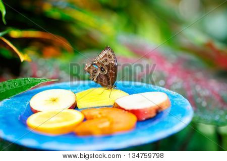 A shallow focus closup image of a beautiful Butterfly landing for food