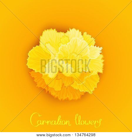 Juicy burgeon blossom of carnation. Just picture postcard with a flower. Vector design element