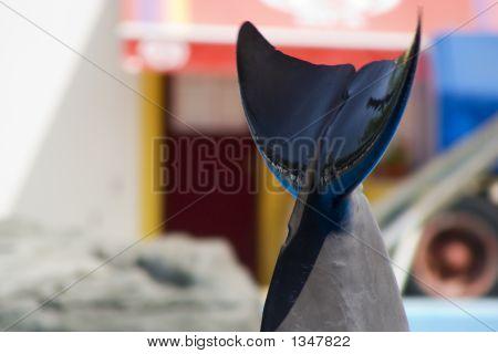 Dolfin staart