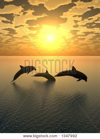 Dolphin Yellow Sunset_2